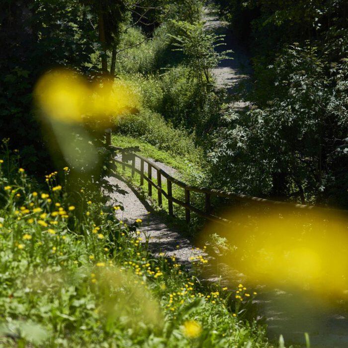 Wanderwege rund um das Schloss   Foto Anja Koehler